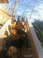 View the album Daycare Dogs