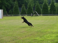 View the album Dog Training at WolfBrook
